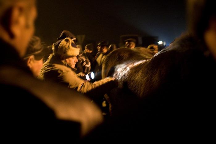 www.danielfrymark.com Targ koni w Skaryszewie.  !!!!Zakaz kopiowania bez zgody autora!!!!